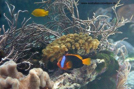 Tauchen in Cairns