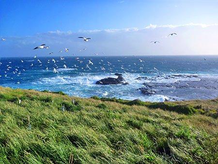 Australiens windige Südküste