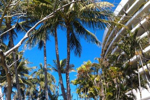 Uferpromenade mit Palmen in Cairns