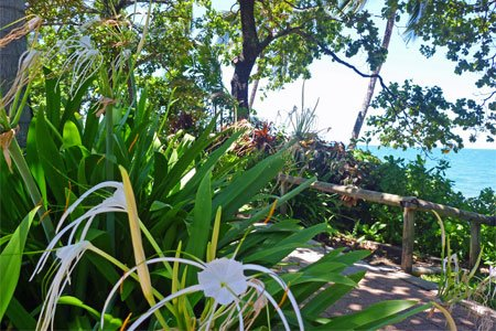 Artikel und Reisetipps zu Cairns