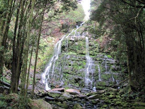 Nelson Falls, Tasmanien