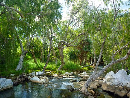 Chillagoe Creek - ein märchenhafter Bach.